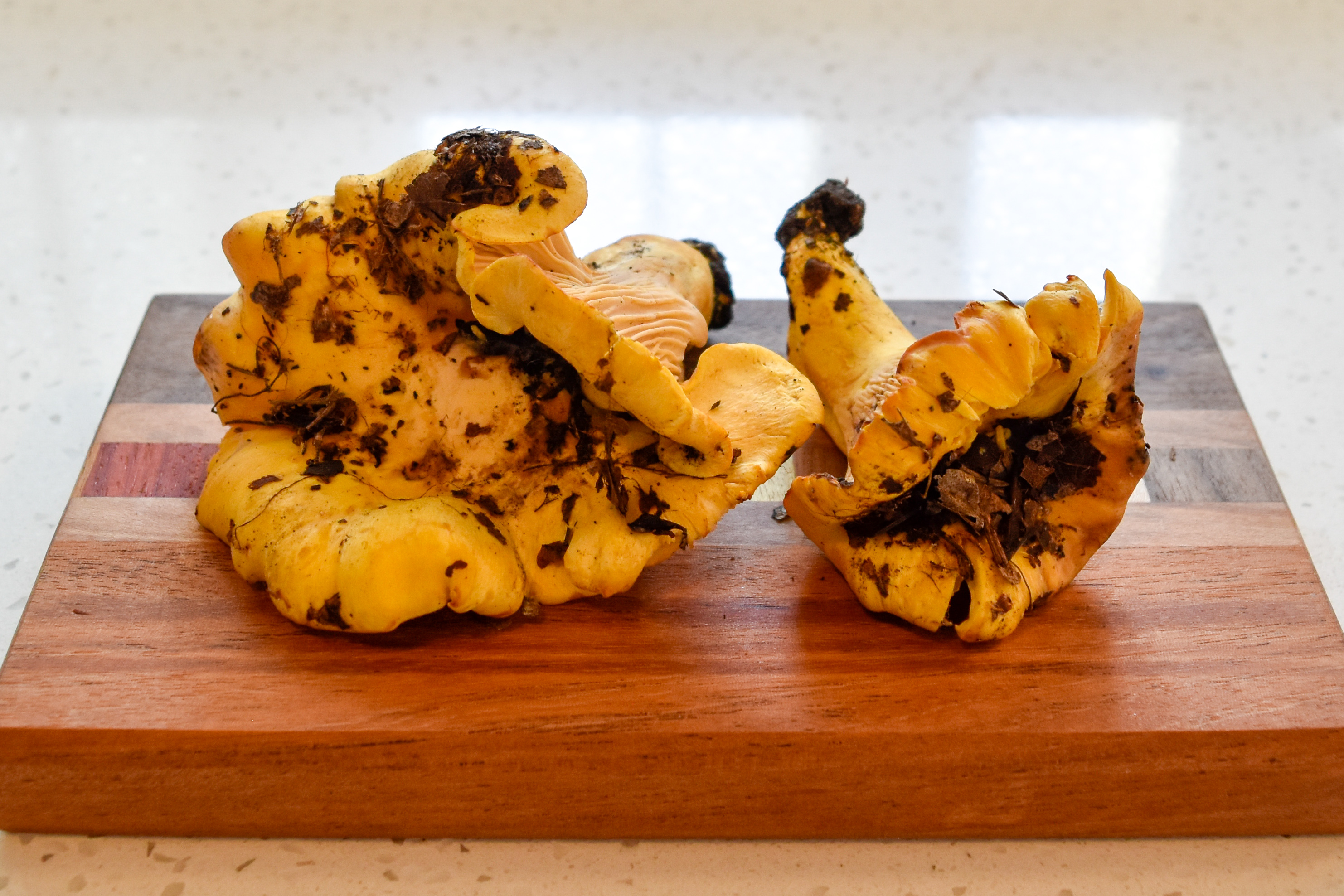 How to Clean & Cook Chanterelle Mushrooms