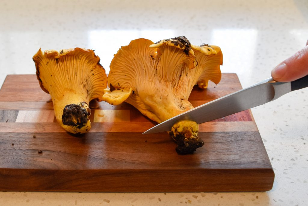 chanterelle mushroom, clean a chanterelle mushrooms